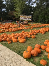 Milledge Ave Pumpkin Patch